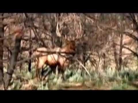 Book Cliffs Roadless Book Cliffs Bull Elk Hunt