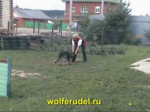 Wolferudel. Oleg von Karthago. Video clip.