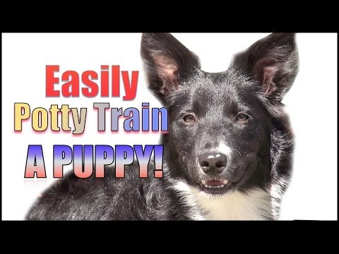 How To Potty Train & Crate Train A Puppy Or Dog Humanely And Effectively! video