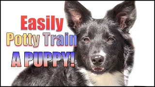 How to Potty Train & Crate Train a Puppy OR Dog HUMANELY and EFFECTIVELY!