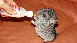 Humans Bottle Feeding Cute Baby Animals - Cute Animal Babies Videos || NEW