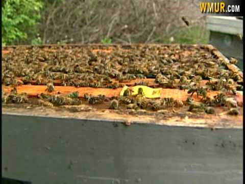Bees Work At Wilson's Farm In Litchfield