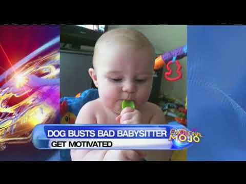 Dog Saved Baby From An Abusive Babysitter video