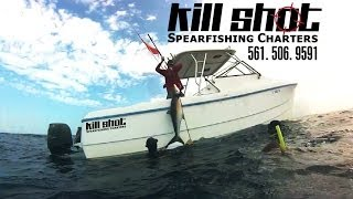 Bull Shark Diving for Cobia