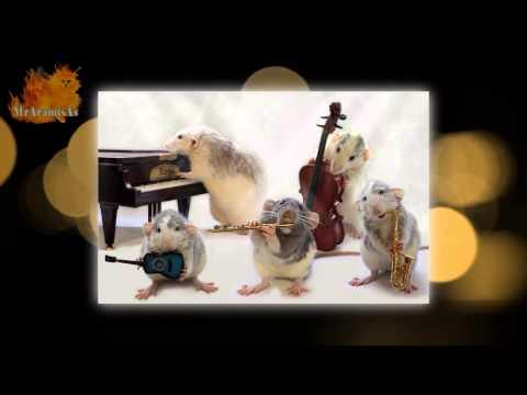 Сute animals. Прикольные крысята музыканты. Просто очаровашки