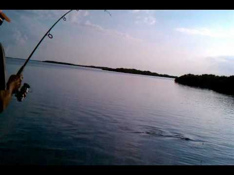 Red Fish Fishing with Captian Gary Cox in Homosassa FL