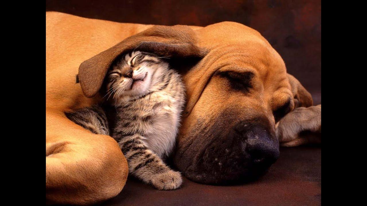 Cute Cats And Dogs  U2665 Best Friends  U2665