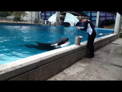 Seaworld San Antonio's dine with Shamu presentation (March 20, 2011)