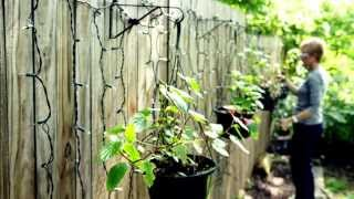 Decorating with Lights: Curtain Lights for the Garden!