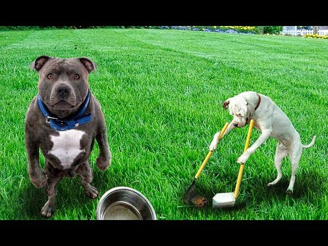 О расходах на содержание собаки Австрия