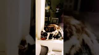 Funny cats sharing food