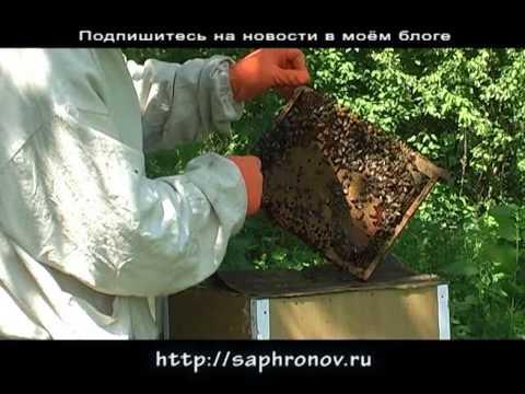 Как сажать пчел на спину 914