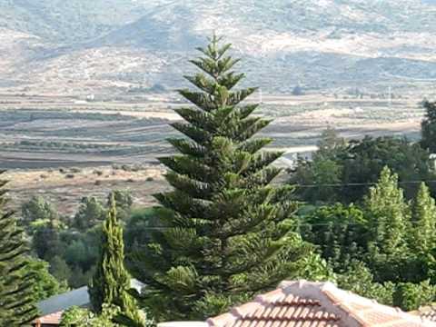 Most Beautiful Christmas Tree