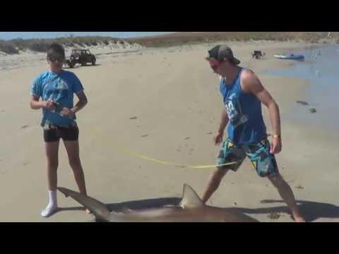 Beach Shark Fishing!