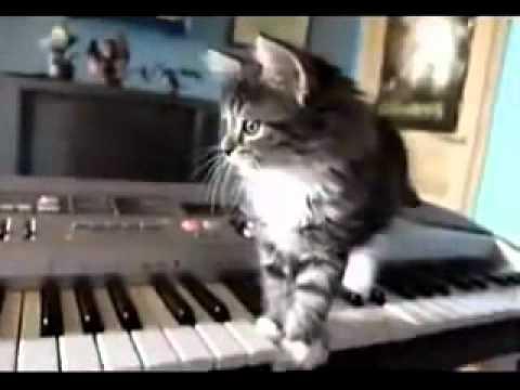 Questo bellissimo gatto è divertente pazzo e  genio.wmv