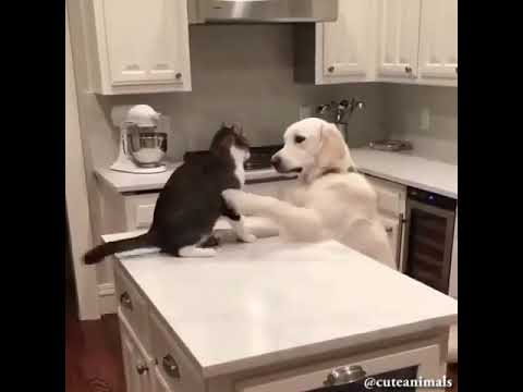 Top 1 Funny Cats and Dogs Compilation