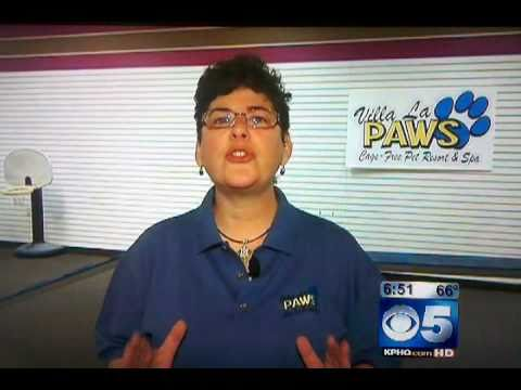 KPHO Ch 5 Visits Villa La PAWS Training Center
