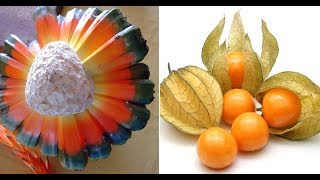 10 Of The Most Weird And Exotic Fruits in The World You've Probably Never Heard Of