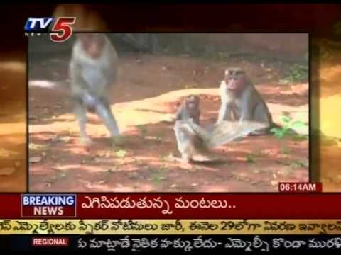 Monkey Funny Fight With Owl