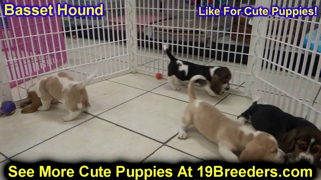 Dogs for Sale in Chicago  Dogs on Oodle Classifieds