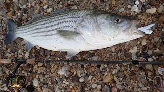 Fishing for Creek Stripers and GoPro 5 Review
