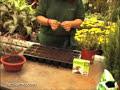 Jardinería: Cómo hacer esquejes