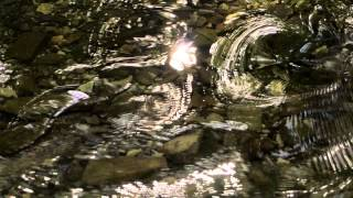 Summer Tranquility ~ sunny stream sound