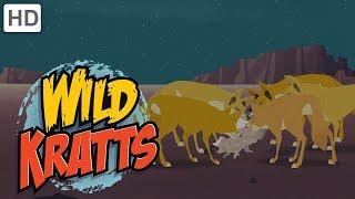 Wild Kratts - Creatures of the Night