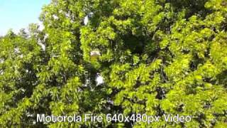 Motorola Fire Video Sample 640x480px