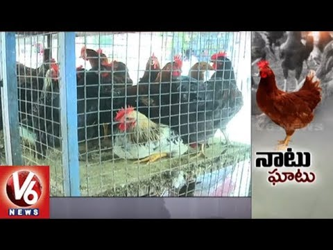 Country Chicken Prices Sour Up Due To Bonalu Season In Hyderabad | V6 News