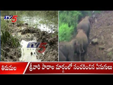 శ్రీవారి పాదాల మార్గంలో సంచరించిన ఏనుగులు | Elephants Hulchul At Tirumala Steps Way | TV5 News