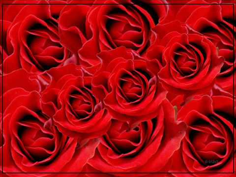 Hinder - Bed Of Roses (Lyrics)