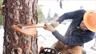 How To Cut Down A Tree & Not Die