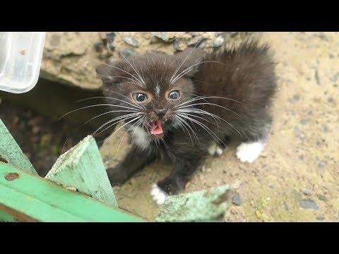 Little kitten is afraid of me