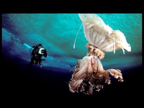 The Underwater World Of Antarctica HD 2014 HD