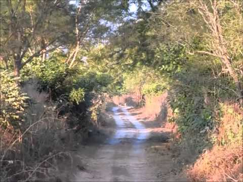 Jim Corbett Tour (Dec 2013): Nainital, Kaladhungi and Corbett Tiger Reserve