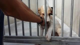 rescatamos un perro de la perrera, no compres mascotas,adoptalas !!!
