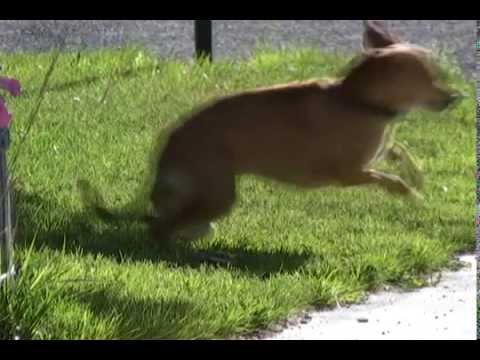 dog vs mousetrap how to keep the neighbors dog out of your yard youtube. Black Bedroom Furniture Sets. Home Design Ideas