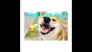 Funny Dog Fails