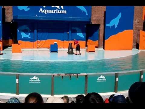 Presentación show lobos marinos (verano 2014)