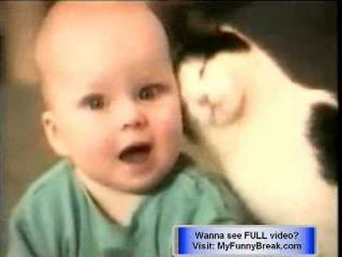 funny cat video. free funny cat videos