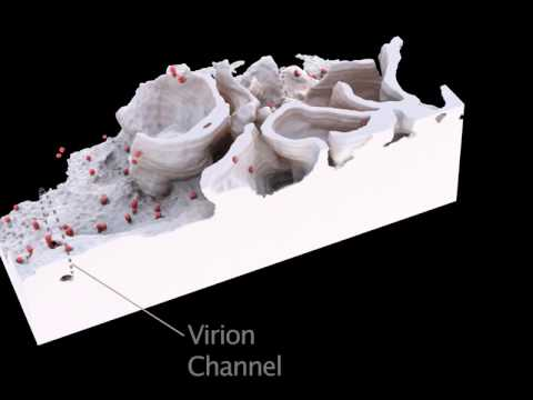 Three-Dimensional Imaging of Viral Infections: Video 9