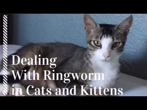 Communication on this topic: How to Treat Ringworm, how-to-treat-ringworm/