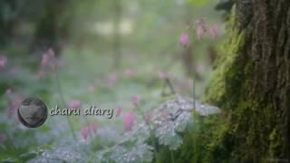 download lagu অসাধারণ একটা গল্প - Charu Diary gratis