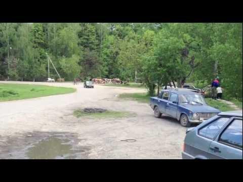 «Урал» лесовоз VS стадо коров. Сурск, Пензенская обл.