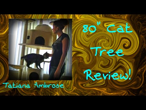 "CHEAPEST 80"" Cat Tree Product Review"
