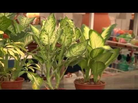 Vivero video watch hd videos online without registration for Vivero plantas online