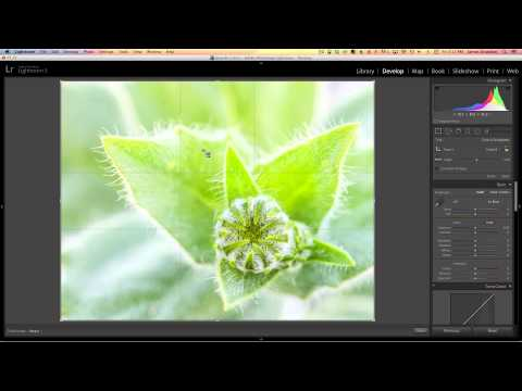 Changing Your Crop Overlay In Adobe Lightroom