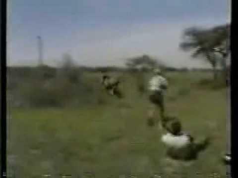 Nevydarená poľovačka na leva.