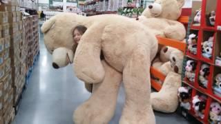 Huge teddy bear costco   Super funny video    Let